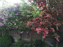 Красивые сценарные цветки! Стоковые Фотографии RF