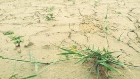 Травянистая пустыня Стоковые Изображения