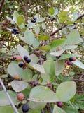 Δασικά φρούτα φύσης Στοκ φωτογραφία με δικαίωμα ελεύθερης χρήσης