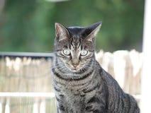 猫 免版税库存照片