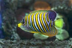 Морские рыбы Стоковые Изображения