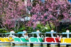 在线的天鹅桨 免版税库存照片