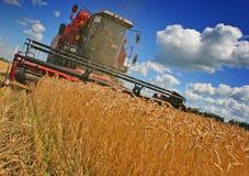 зернокомбайны Стоковое Фото