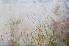 在风的草花 免版税库存照片