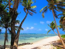看法通过横跨绿松石热带盐水湖的棕榈树 免版税库存照片