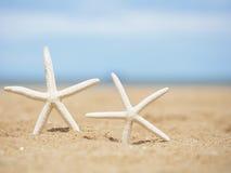 在海滩的特写镜头海星 图库摄影