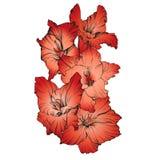Флористическая зацветая иллюстрация вектора гладиолуса нарисованная рукой Стоковые Фотографии RF