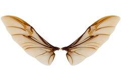 在白色背景隔绝的昆虫翼 图库摄影