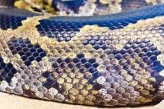 蛇皮关闭照片在动物园里 免版税库存照片