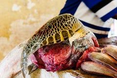 销售的乌龟 图库摄影