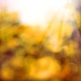 Оранжевая предпосылка с солнечным светом Стоковая Фотография