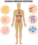 人的免疫防御图 免版税库存照片