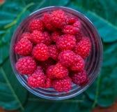 在玻璃的宏观莓,与绿色叶子 顶视图 免版税库存图片