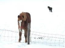 马 免版税库存图片