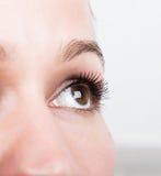 美好的少妇睫毛引伸 与长的睫毛的妇女眼睛 美容院概念 免版税库存图片