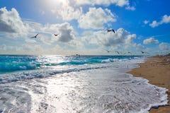 歌手在棕榈滩佛罗里达美国的海岛海滩 免版税库存照片