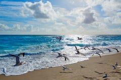 歌手在棕榈滩佛罗里达美国的海岛海滩 免版税图库摄影
