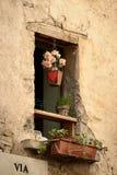 与花盆的窗口 免版税库存图片