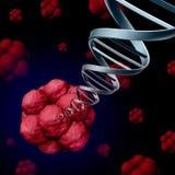 干细胞脱氧核糖核酸 免版税库存图片