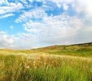 лето поля Стоковые Фотографии RF