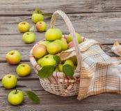 篮子用苹果 免版税库存照片