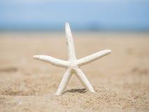 在海滩的特写镜头海星 库存照片