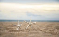 在海滩的特写镜头海星 免版税库存照片