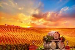 与葡萄酒桶的葡萄园日落 免版税库存图片