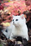 秋天小猫 库存图片