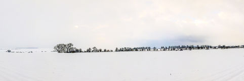 在积雪的风景的白色冰冷的树 免版税库存图片
