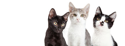 三个一起小猫社会媒介横幅 免版税图库摄影