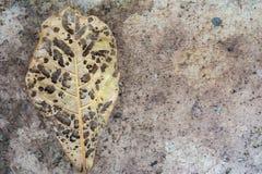 有孔的叶子在地面 库存图片