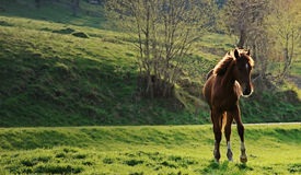 лошадь одичалая Стоковая Фотография