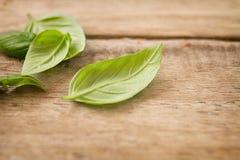 Свежие листья базилика Стоковые Изображения RF