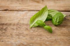 Свежие листья базилика Стоковые Фотографии RF