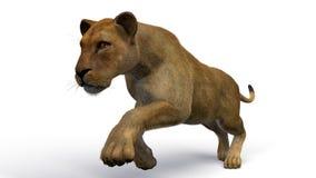 雌狮的图象 免版税库存照片