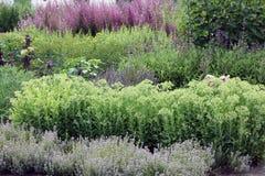 Красочный сад травы Стоковая Фотография