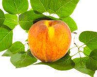 桃子成熟橙黄色和绿色叶子 免版税库存照片