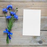 蓝色矢车菊和空白的贺卡花束  免版税库存图片