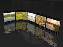 Съемки природы Стоковые Фотографии RF