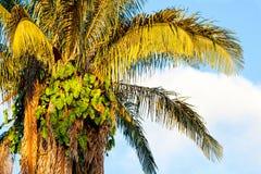 洒满阳光的树 库存图片