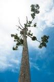 在蓝天背景的下面树 图库摄影
