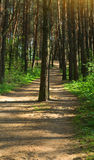 被遮蔽的森林 免版税库存图片