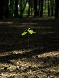 神奇的森林 免版税图库摄影