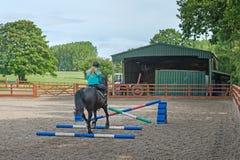 马跳跃 库存图片