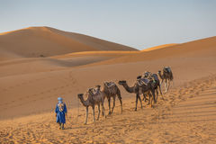 骆驼在沙漠 图库摄影