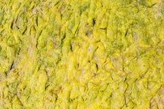 绿藻类烂泥 免版税图库摄影