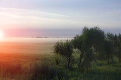 与树剧烈的天空雾的风景 库存照片