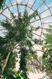 Тропическая флора в гигантской стеклянной биосфере Стоковые Изображения RF
