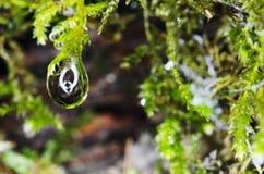 Падения дождя на мхе Стоковые Фото